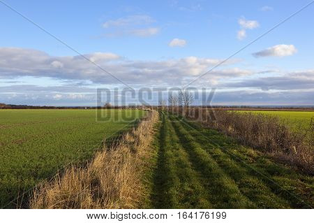 Footpath Through Agriculture