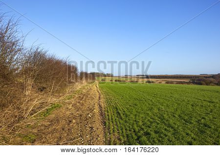 Winter Hedgerow And Wheat