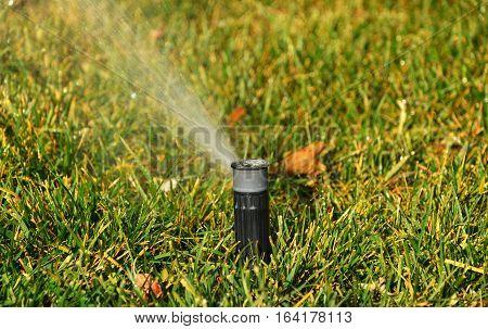 Grass sprinkler in the park close up