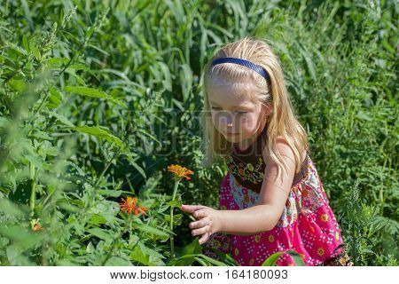 Beautiful school age girl picking wildflowers in field