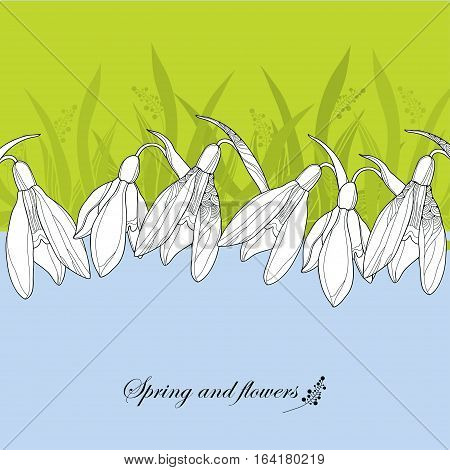 Vector ornate outline Snowdrop flowers or Galanthus in white on the background with grass. Greeting card with floral elements in contour style. Traditional spring background.