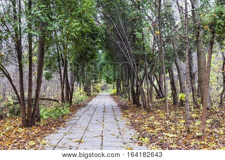 Walking path in the deserted autumn Park covered with fallen leaves from trees and Manchurian walnut.