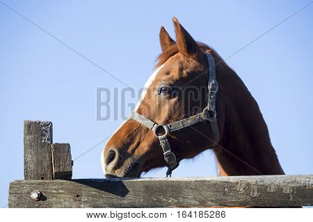 Beautiful young stallion looking over the corral fence. Check out my another equine photos please