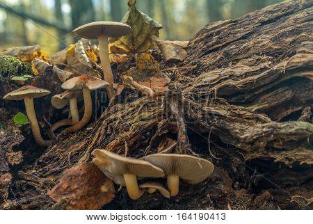 Family Of Mushrooms