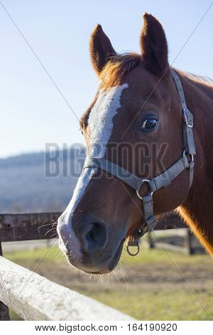 Head of a saddle horse in the pen. Check out my another equine photos please