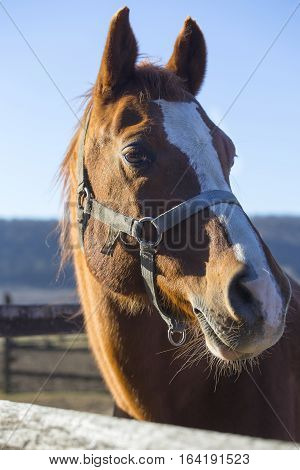 Vertical close up of a purebred warmblood stallion when looking over fence on a cold winter day. Check out my another equine photos please