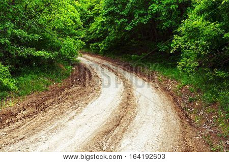 Rural road laid in the dense forest