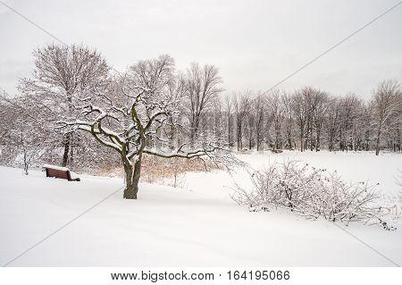 Winter snowy landscape in Montreal Quebec (Botanical Garden)