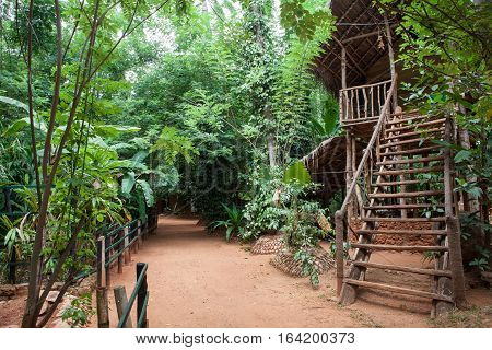 TreeHouse, tree house in the forest. Tropical forest path clay and wooden cottage with access stairs. Sri Lanka
