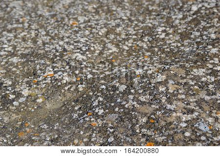 Lichen on stone background close up photo