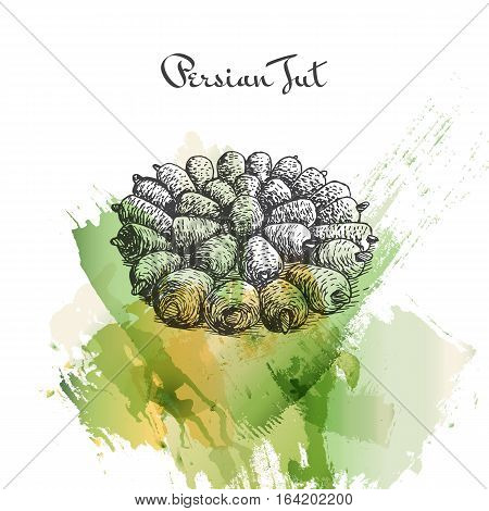 Persian Tut watercolor effect illustration. Vector illustration of Persian cuisine.