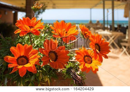 Gazania flowers in the sun on terrace at sea.