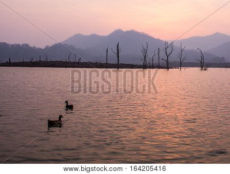 duck in Mae ngad dam, Chiangmai Thailand