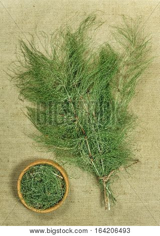 Equisetum horsetail. Dried herbs for use in alternative medicine spa herbal cosmetics herbal medicine preparing infusions decoctions tinctures powders ointments butter tea bath.