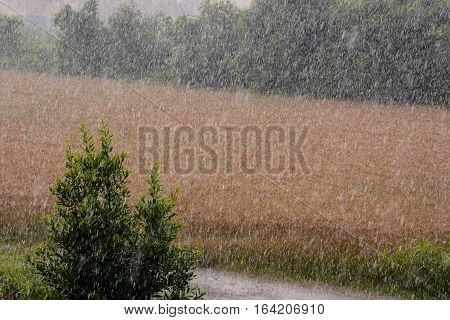 Agricultural Disaster, Field Of Flooded Crops