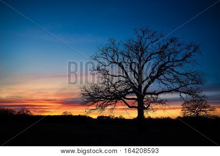 Texas winter sunset with oak tree silhouette over pasture