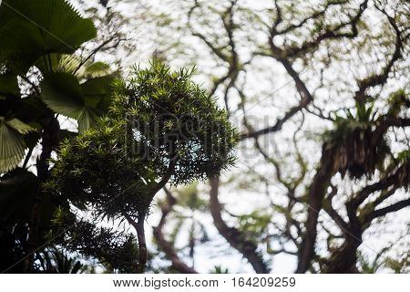Beautiful silhouette view of tree consist of leaf and branch for background
