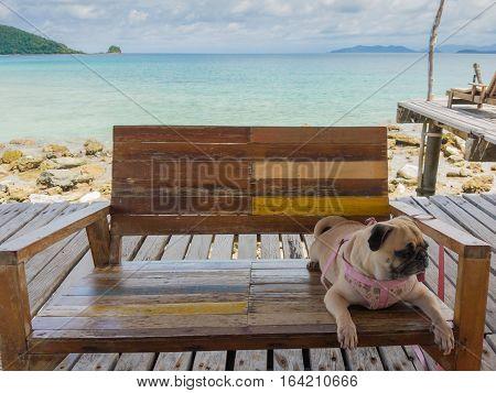Cute pug dog relaxing restingor sleeping at the sea beach under the bright sun on the pier bridge