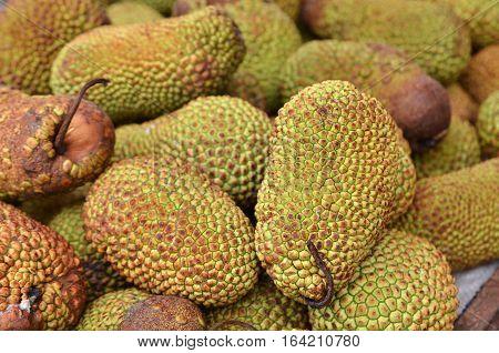 Cempedak Or Artocarpus Integer