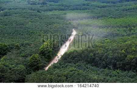 Dust Road Through Green  Jungle At Vietnam