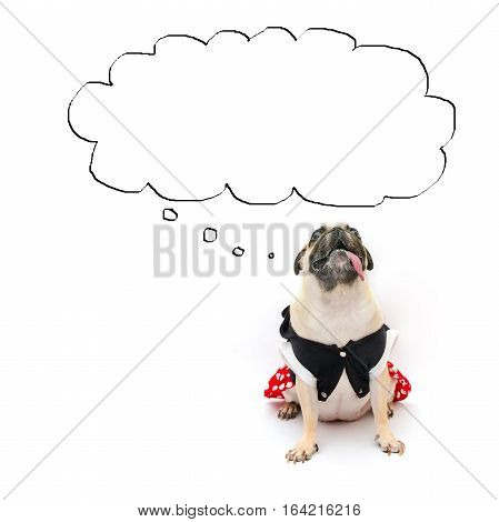 Cute puppy pug dog sits with tongue out and looks up to the cloud for label text banner. Conceptual of pug dog banner or advertisement with copy space