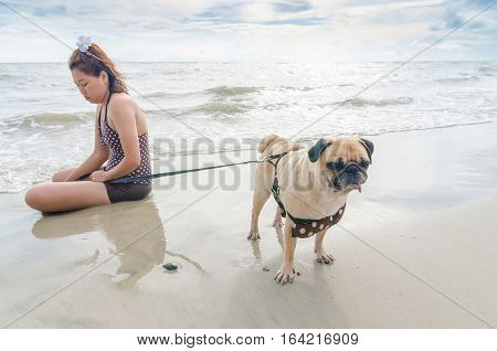 Selective focus on pug dog playing and touchy with girl on summer sea beach