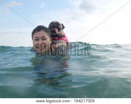 Cute dog puppy pug fear and afraid water ride on owner people woman back in summer beach Koh Kood Thailand. (Kood Island Trat province). Summer background. Summer concept.
