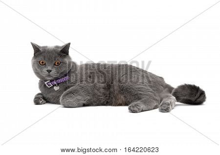 cat wearing a collar with a pendant on a white background. horizontal photo.