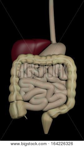 3d rendering of the human digestive system isolated over black