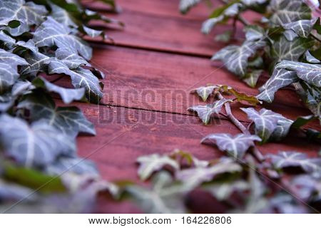 Ivy grows on the wooden walls. Ivy.