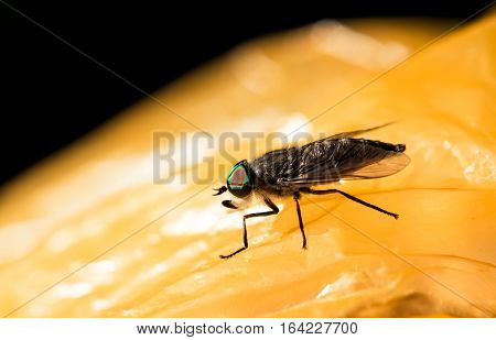 Horsefly on package close up macro photo