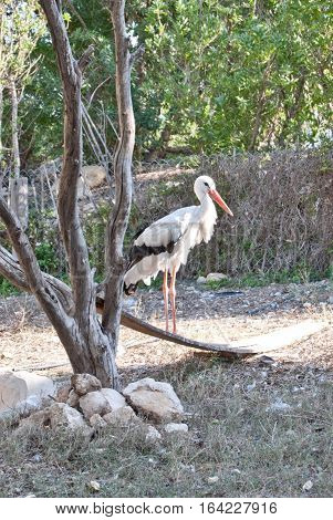 White stork among trees at Tunis zoo