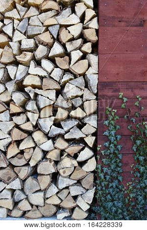 Leveled chipped wood in the woodshed. Heating season. On the wall of the woodshed ivy. Wood.
