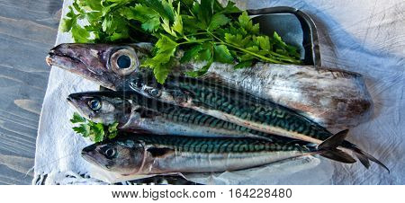 blue fish freshly caught great for a healthy diet ready to be cooked with parsley and lemon oil