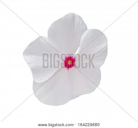 White Impatiens Flower, Isolated On White Background