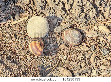 Brown Snail Shell On The Ground, Outdoor Close Up
