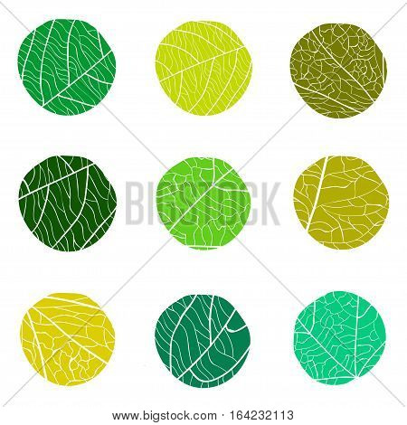 Floral green vector pattern. Curve circles with white veins inside. The concept for logo.
