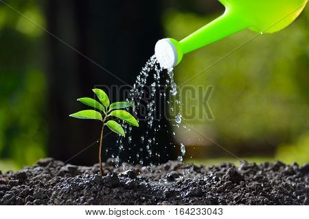 Young plant watered from a watering can