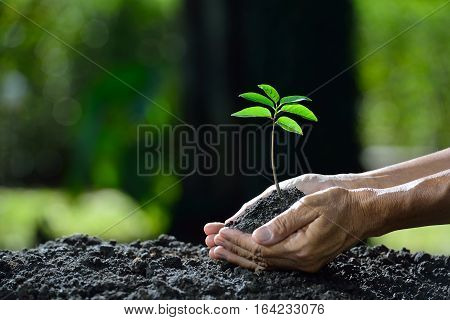 Farmer's hand holding a green young plant