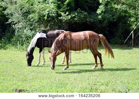 Beautiful Horses On A Farm
