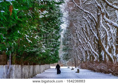 Uzhgorod Ukraine - January 5 2017: Passers walking in park on a cold winter day.