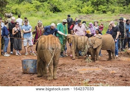 Tourists Stroking Baby Elephants In Kenya, Editorial