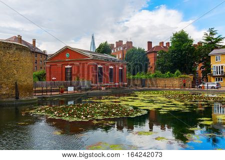 Lily Pond In London, Uk