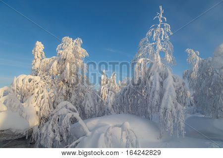 sunny day in forest ural mountains winter forest russian nature pine trees in snow