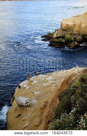 Vertical image of ocean with waves making their way to the jagged cliffs at the edge of the beach.