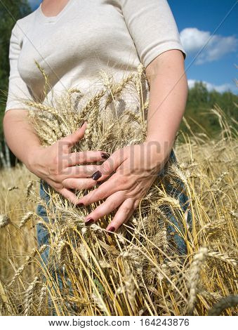 Young woman with beautiful manicure holding ripe ears of rye on field on sunny summer day under blue sky with white clouds. Vertical photo closeup