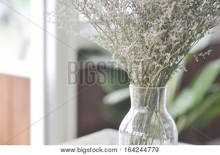 purple caspia flowers in a vase or caspia flower