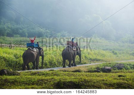 Group tourists to ride on an elephant in forest Thailand.