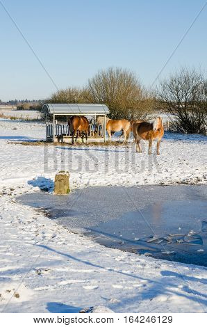 Three Haflinger horses eating at metal feeding site with frozen lake and snow covered landscape, Germany.