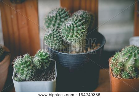 Little cactus plant in the flower pot. cactus plants in retro effect image.(selective focus )